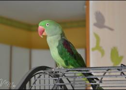 Photographe Animalier Toulouse VNM Pics perroquet