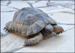 Photographe Animalier Toulouse VNM Pics Tortue
