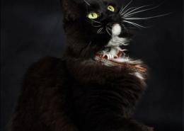 Photographe Animalier Toulouse VNM Pics Chat de Maison