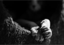 Photographe Animalier Toulouse VNM Pics Sphynx