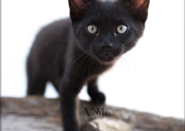 Photographe Animalier Toulouse VNM Pics chaton