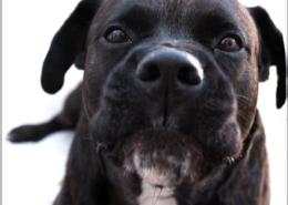 Photographe Animalier Toulouse VNM Pics chien