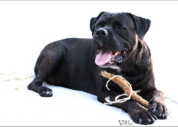 Photographe Animalier Toulouse VNM Pics chien