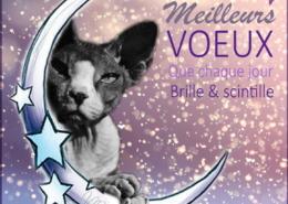 Photographe Animalier Toulouse VNM Pics