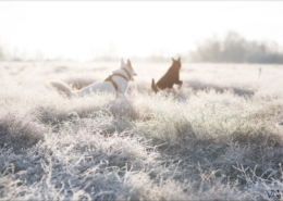 Photographe Animalier Toulouse VNM Pics chiens