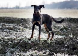 Photographe Animalier Toulouse VNM Pics Beauceron